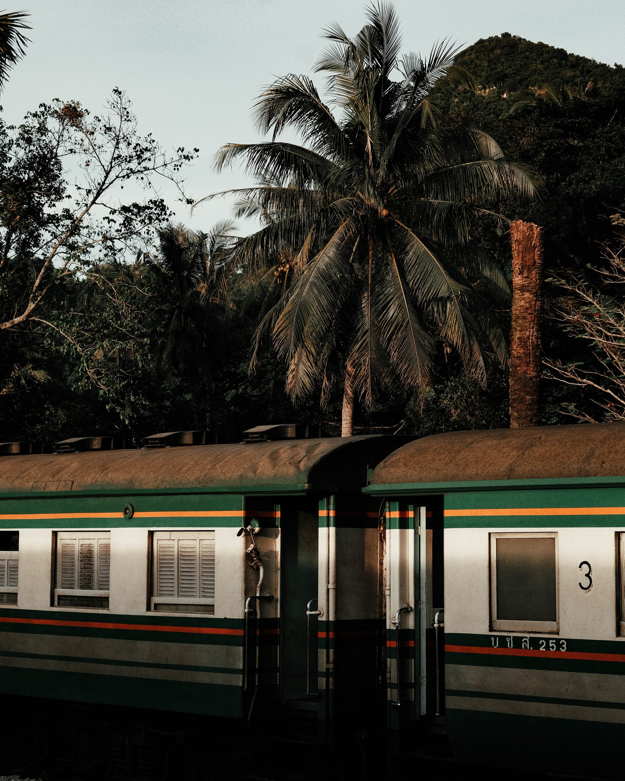 green and white train near palm trees during daytime